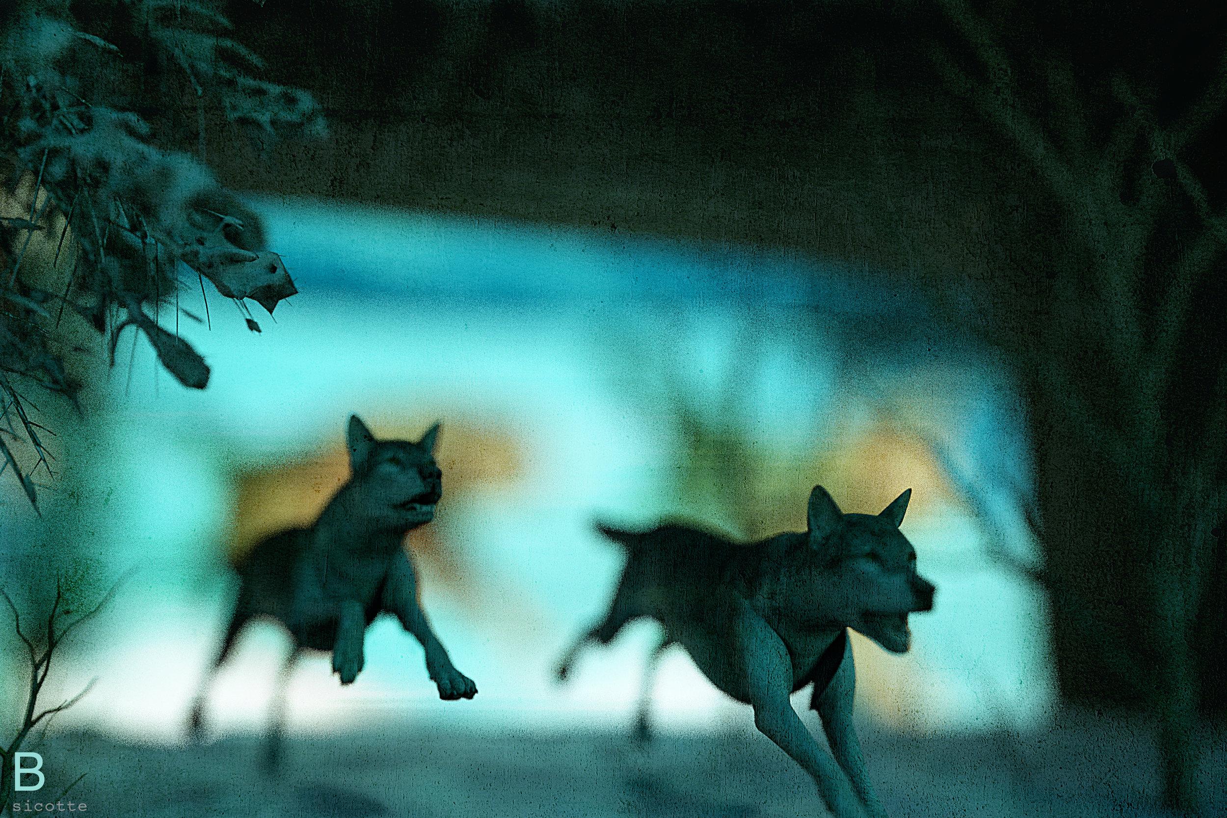 M16_Wolves_Close_C_B.jpg