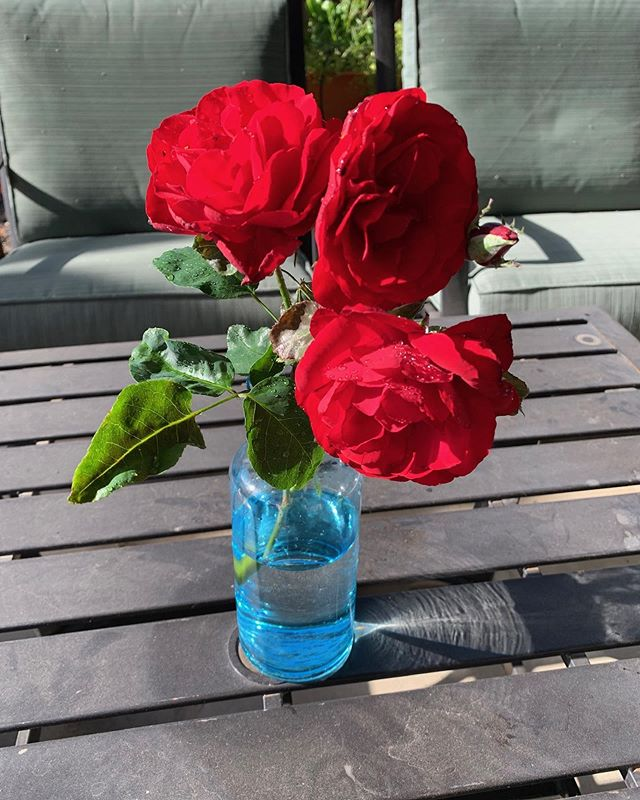 I snipped these out of my garden this morning. They reminded me of my mother. She had a wonderful trellis of red roses that hung over the carport. The largest blooms I've ever seen. #happygardener #mom #bookseries #midlife