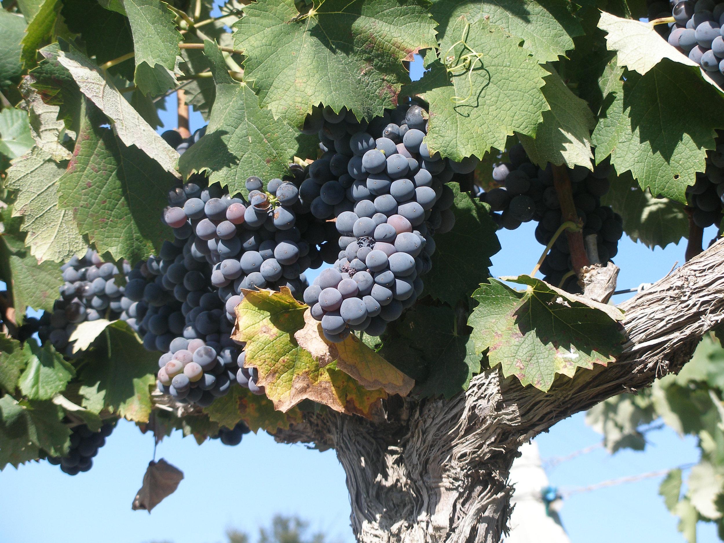 Property for Sale: 1575 Alisos Canyon, Happy Canyon, Santa Ynez, CA 93460 List Price: $7,750,000 108.8 acres 75 acres of vineyard Vogelzang Vineyard!