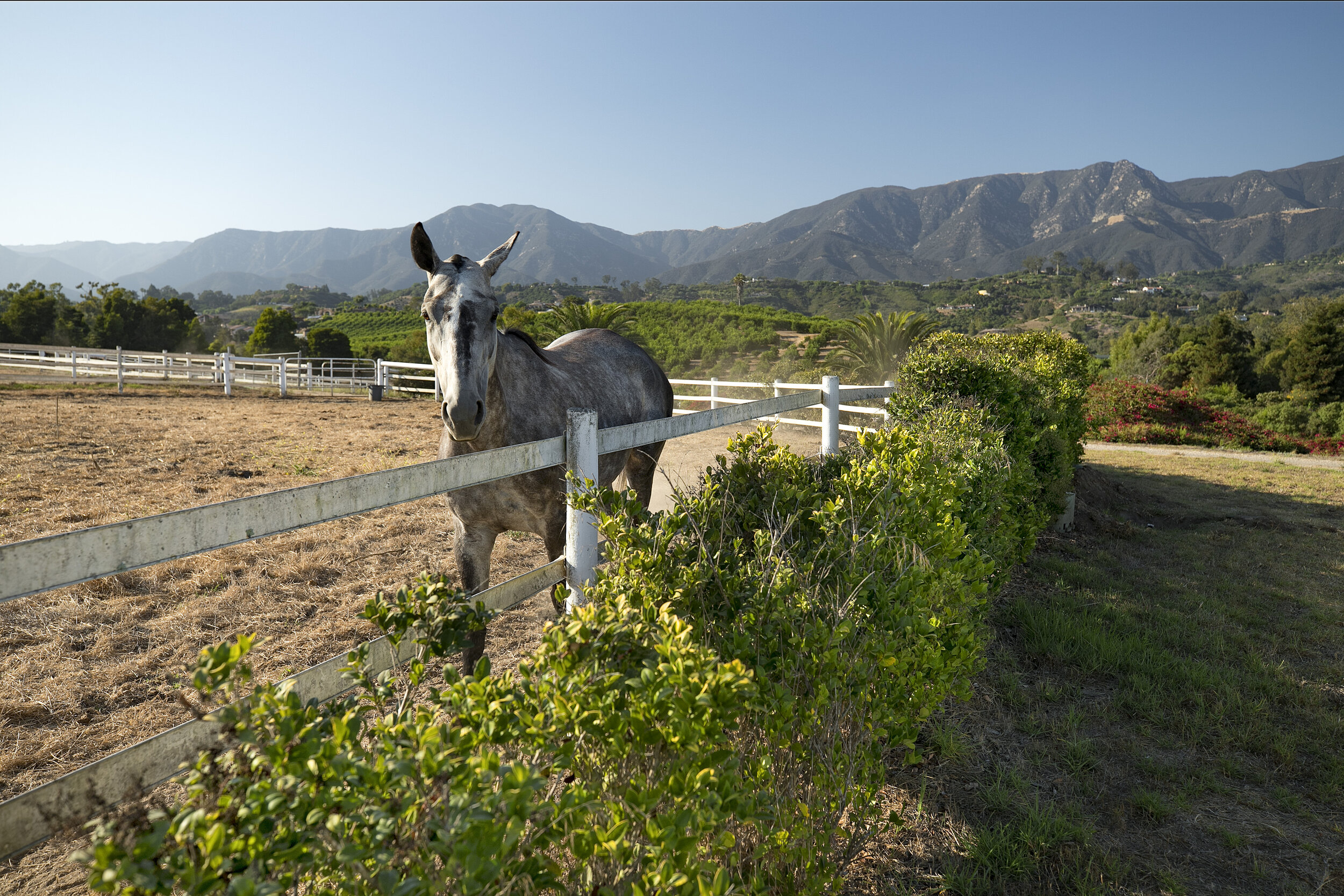 Tuscany Oaks Farm, Summerland - offered at $19,800,000