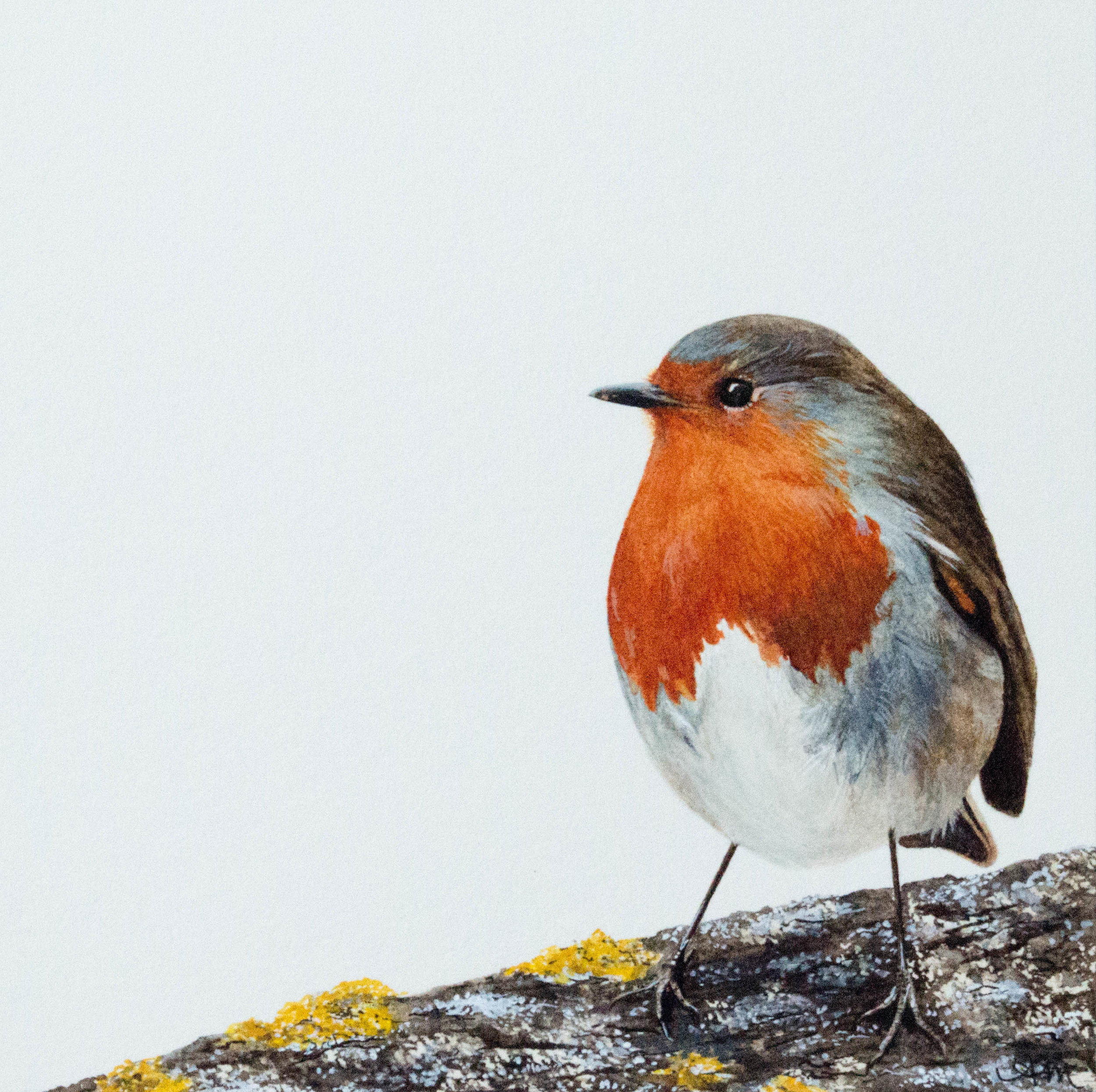 european robin, watercolor on paper * - SOLD -
