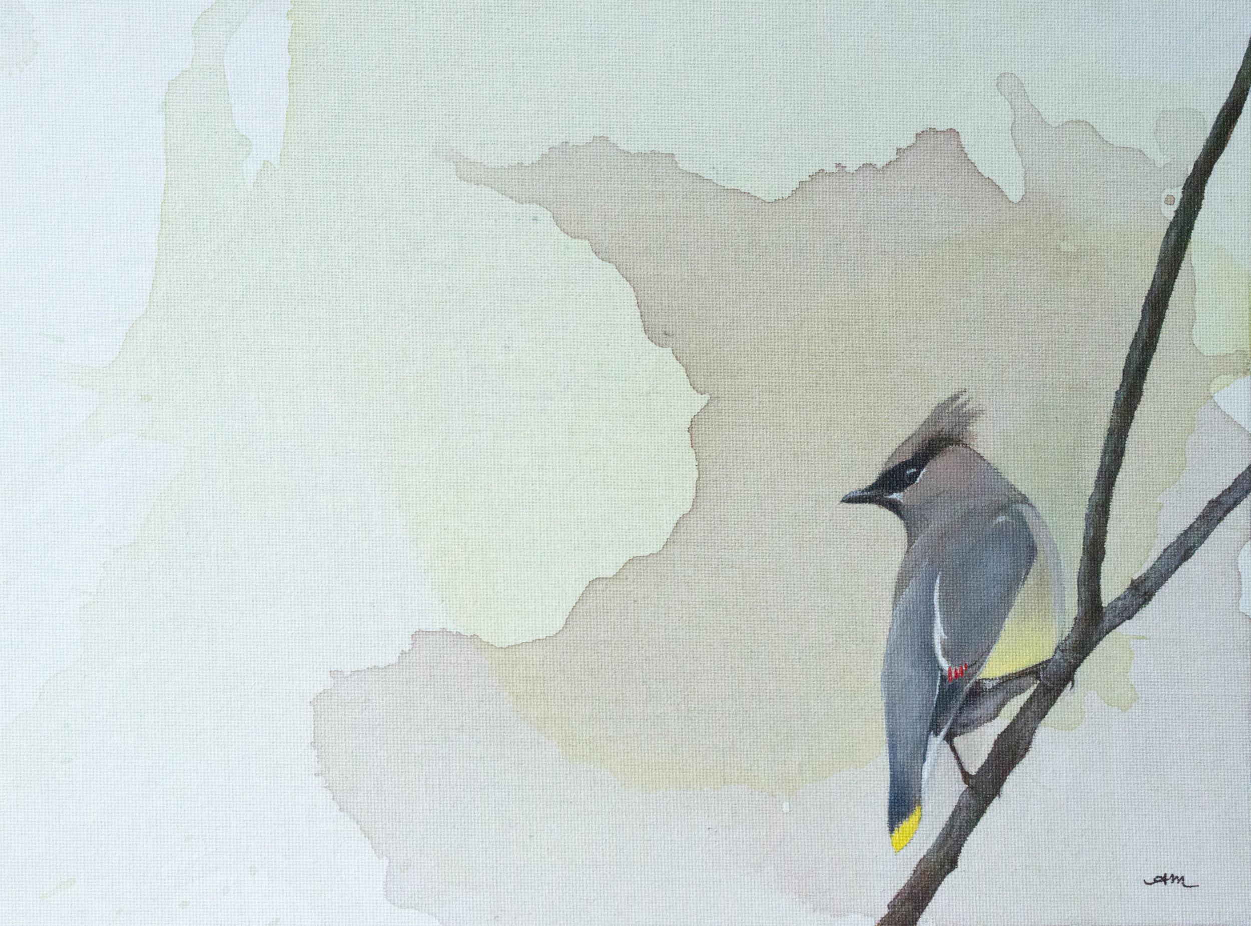 cedar waxwing, acrylic on canvas - SOLD -