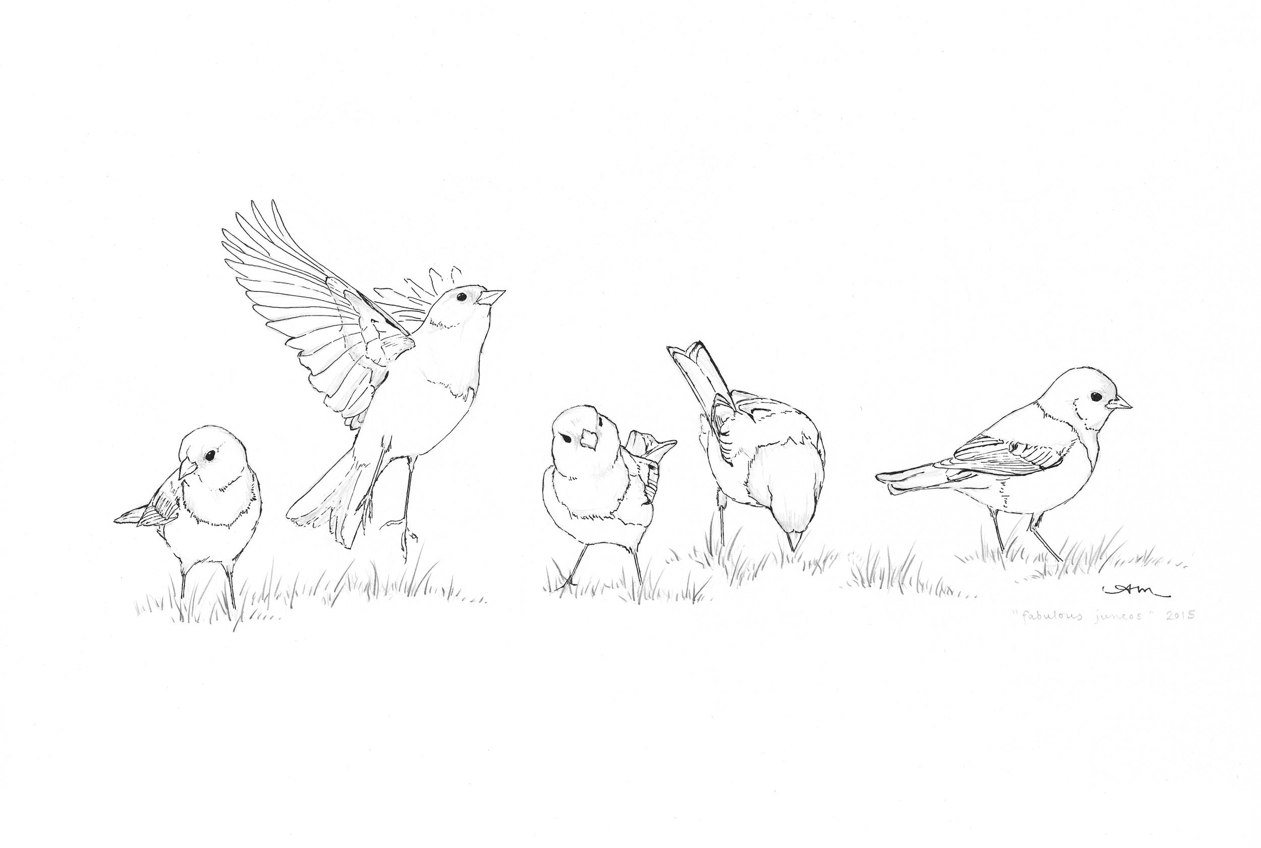 dark-eyed juncos, pencil and ink on paper - SOLD-