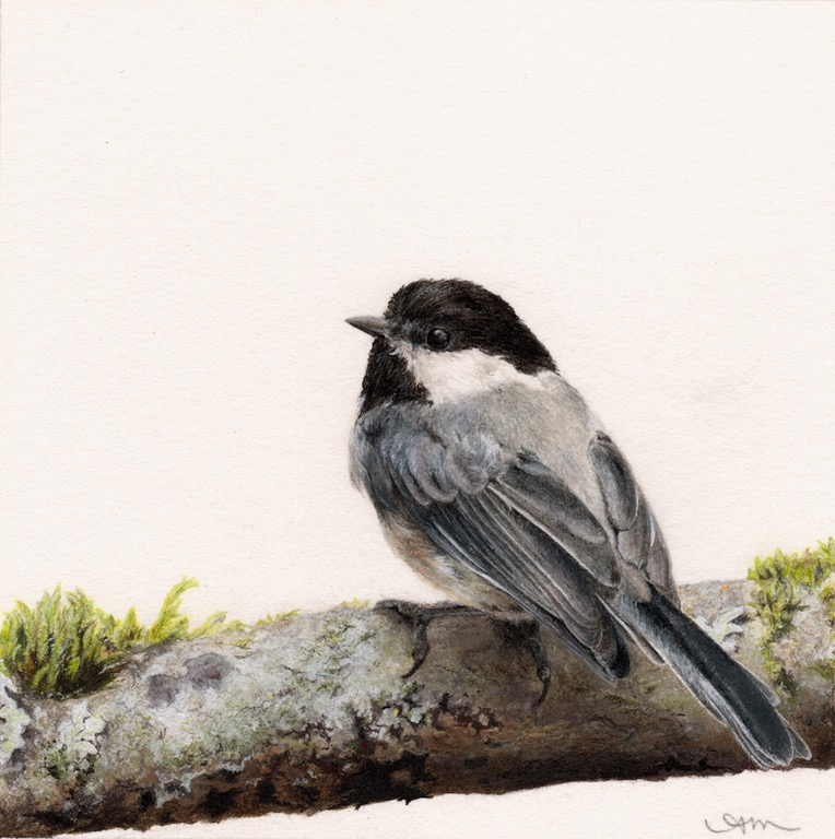 black-capped chickadee, watercolor on paper -PRIVATE COLLECTION-