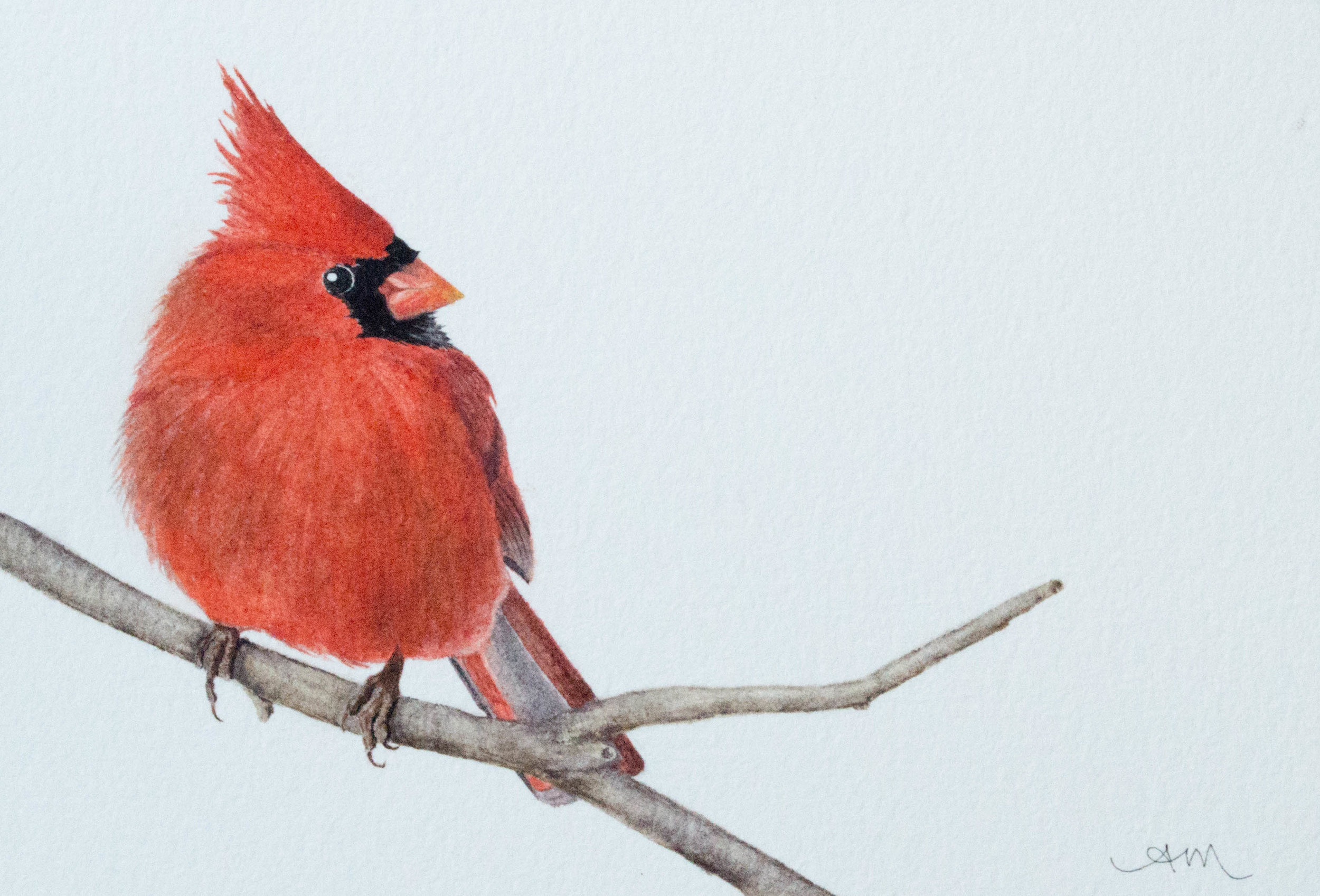northern cardinal, watercolor on paper* 2013 - SOLD-