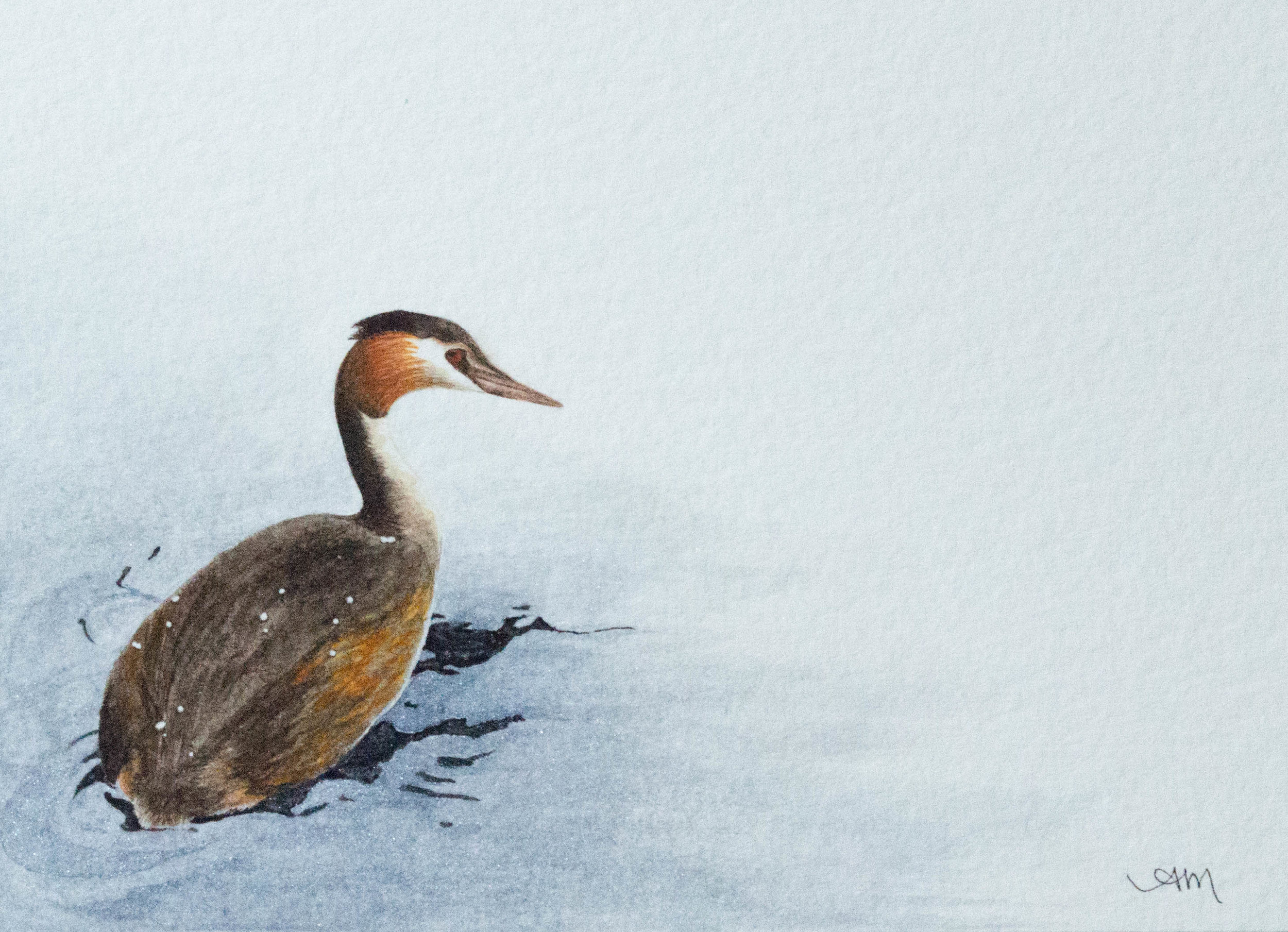 great crested grebe, watercolor on paper 2014 - SOLD-