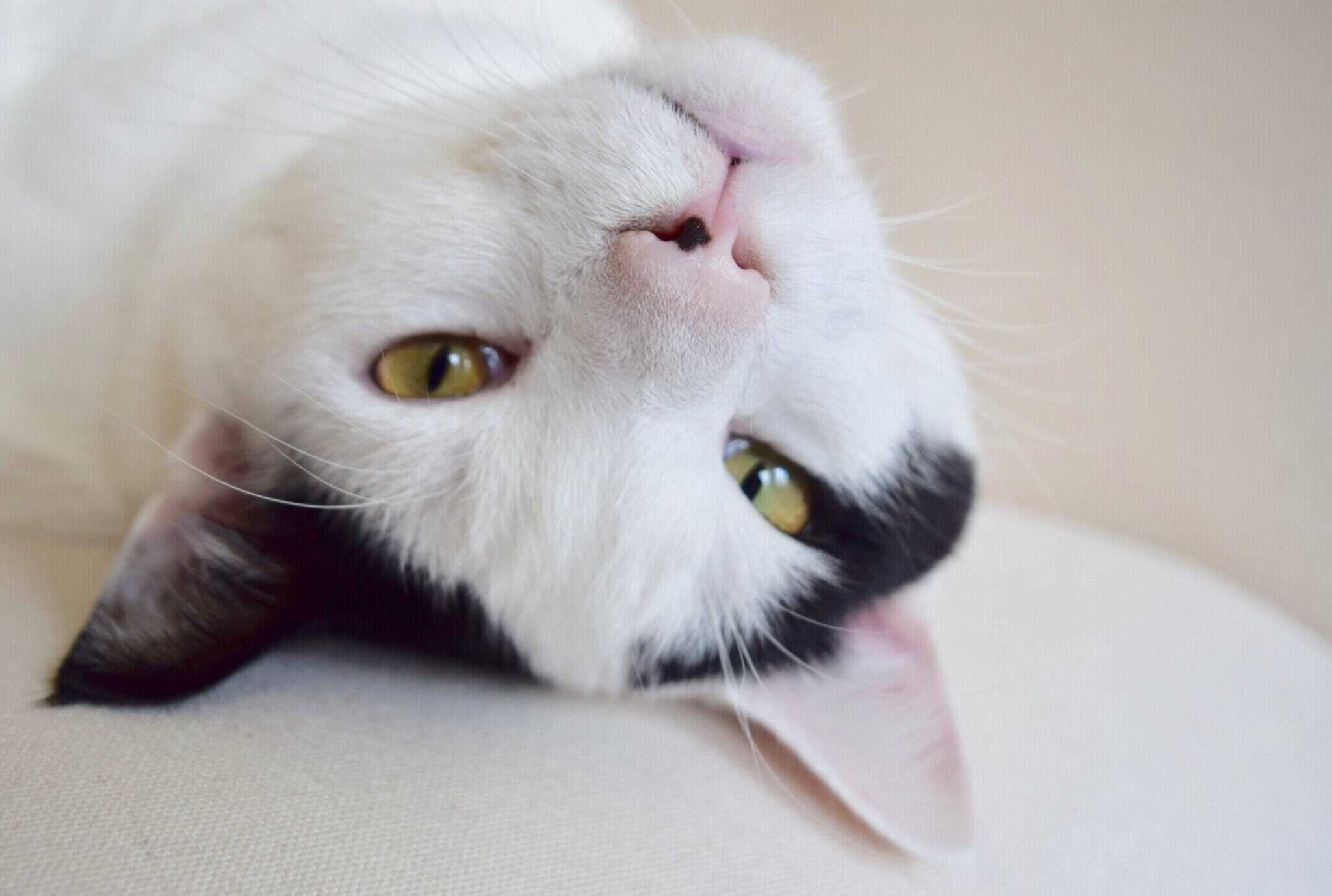 Cat People - Does your cat find your carpet more appealing than it's litterbox? Have they taken it upon themselves to launch sneak attacks on your ankles every morning? We are here to help your cat teach you to be a better roommate :).