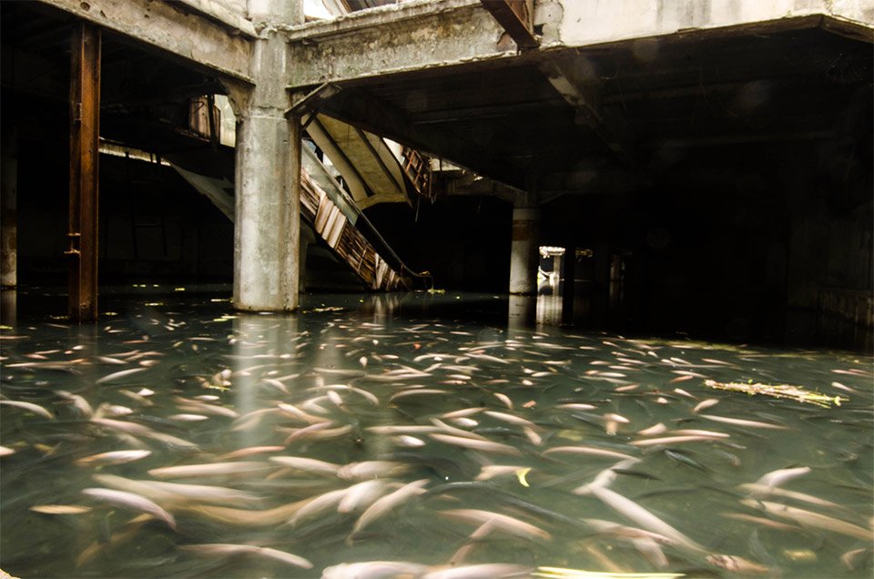Bangkok's New World shopping mall was abandoned back in 1999. Later, an unknown person started populating its flooded basement with koi and catfish.  Jesse Rockwell  captured these amazing photos of its unusual residents.
