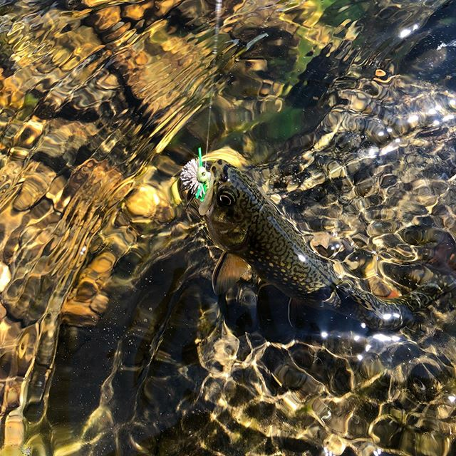 Cool alpine streams with dry fly treats. #dryflyarmory