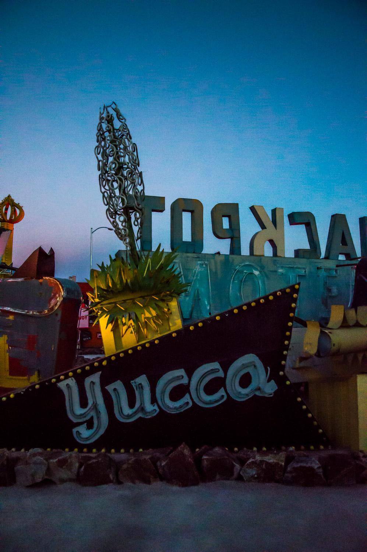 Yucca Glow