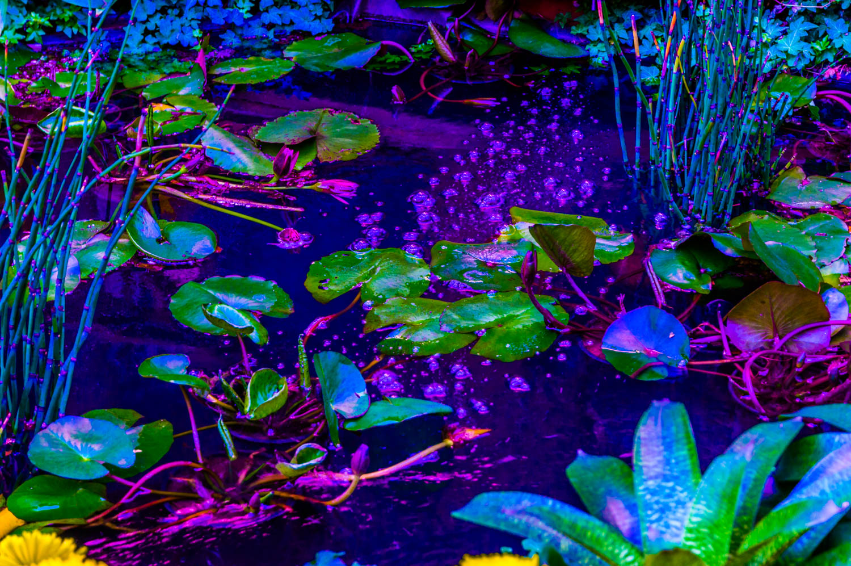 Neon Lilypads