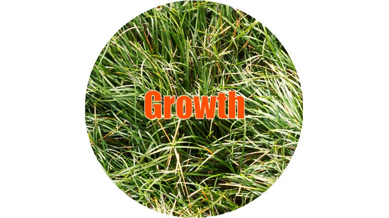 growth-thumb.jpg