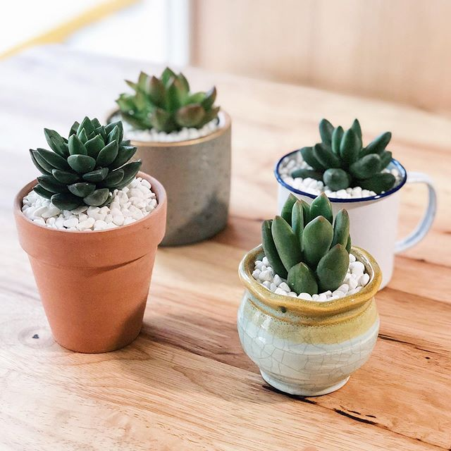 just ended our 5-months long classes for @kinsbyhelloflowers and it's our first fair tmrw for this year's batch! Look at these cute little succulent planters! Hit us up if you guys want to get them! 🥰🥰🥰 The proceeds go straight to the ladies and also the funding of our training programme!