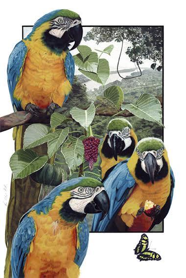 hurskin_eva_Blue_gold_macaws2.jpeg