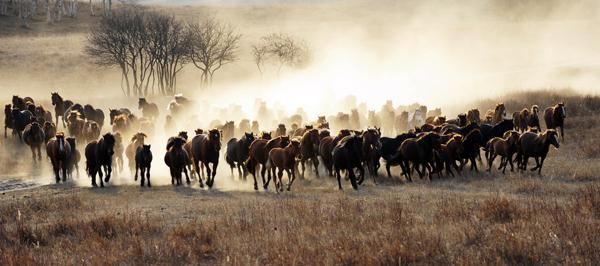 "Shanghai-born New York photographer, graphic designer, print designer, and advertising executive Jack Lee took this photo ""Full Steam Ahead"" on an Inner Mongolian prairie in Chifeng, where Qing emperors autumnally enjoyed horseback riding."