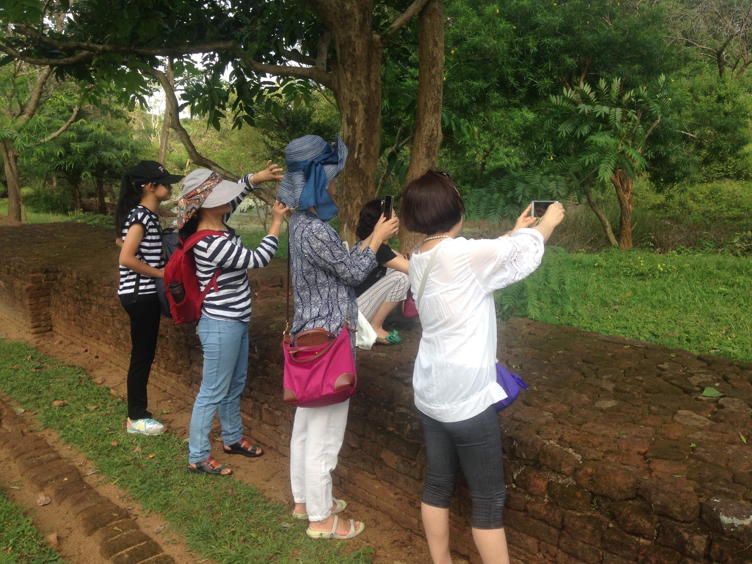 Tourists taking photos of monkeys.