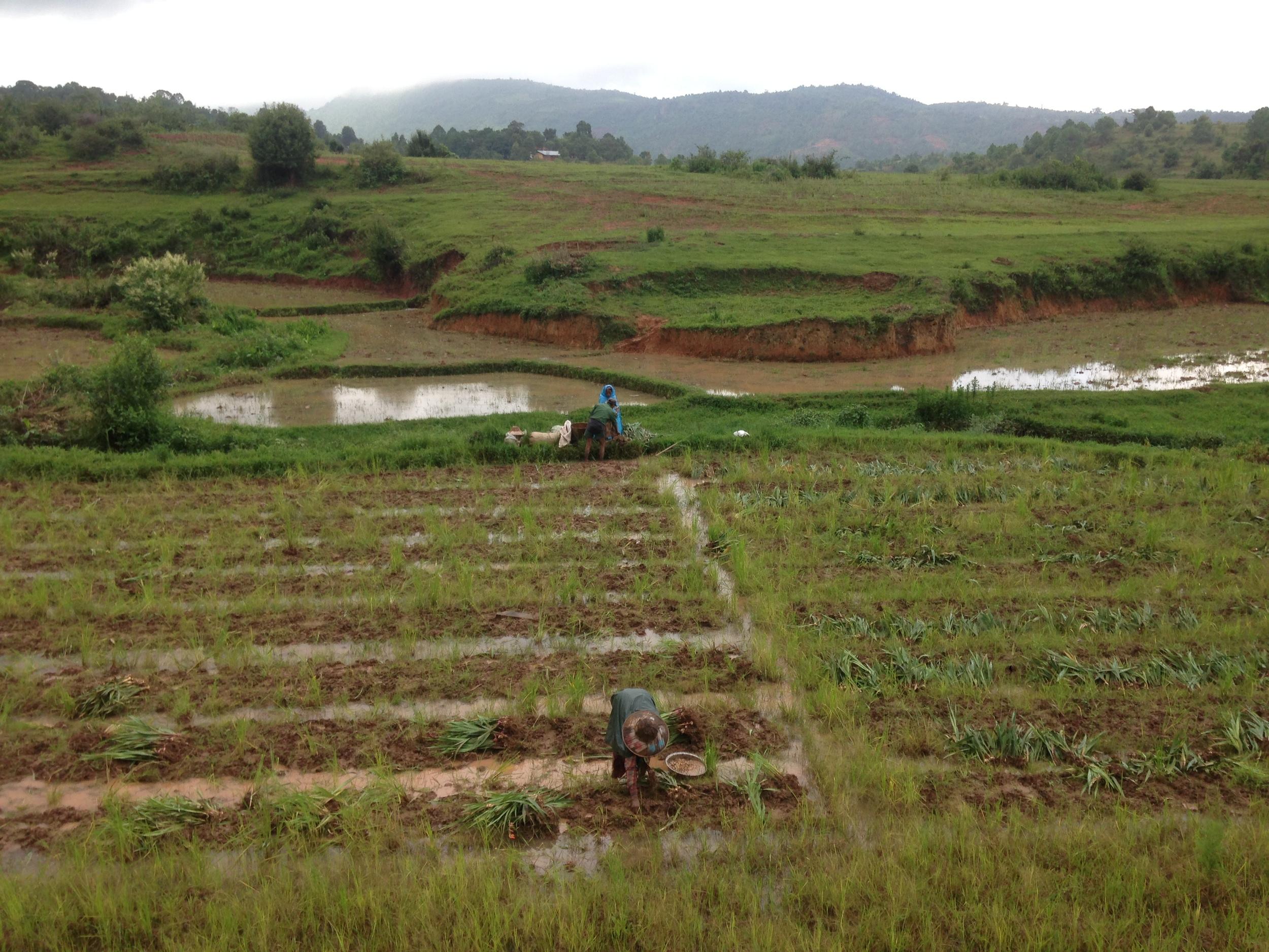 Farmland and rice paddies between Kalaw and Inle Lake.