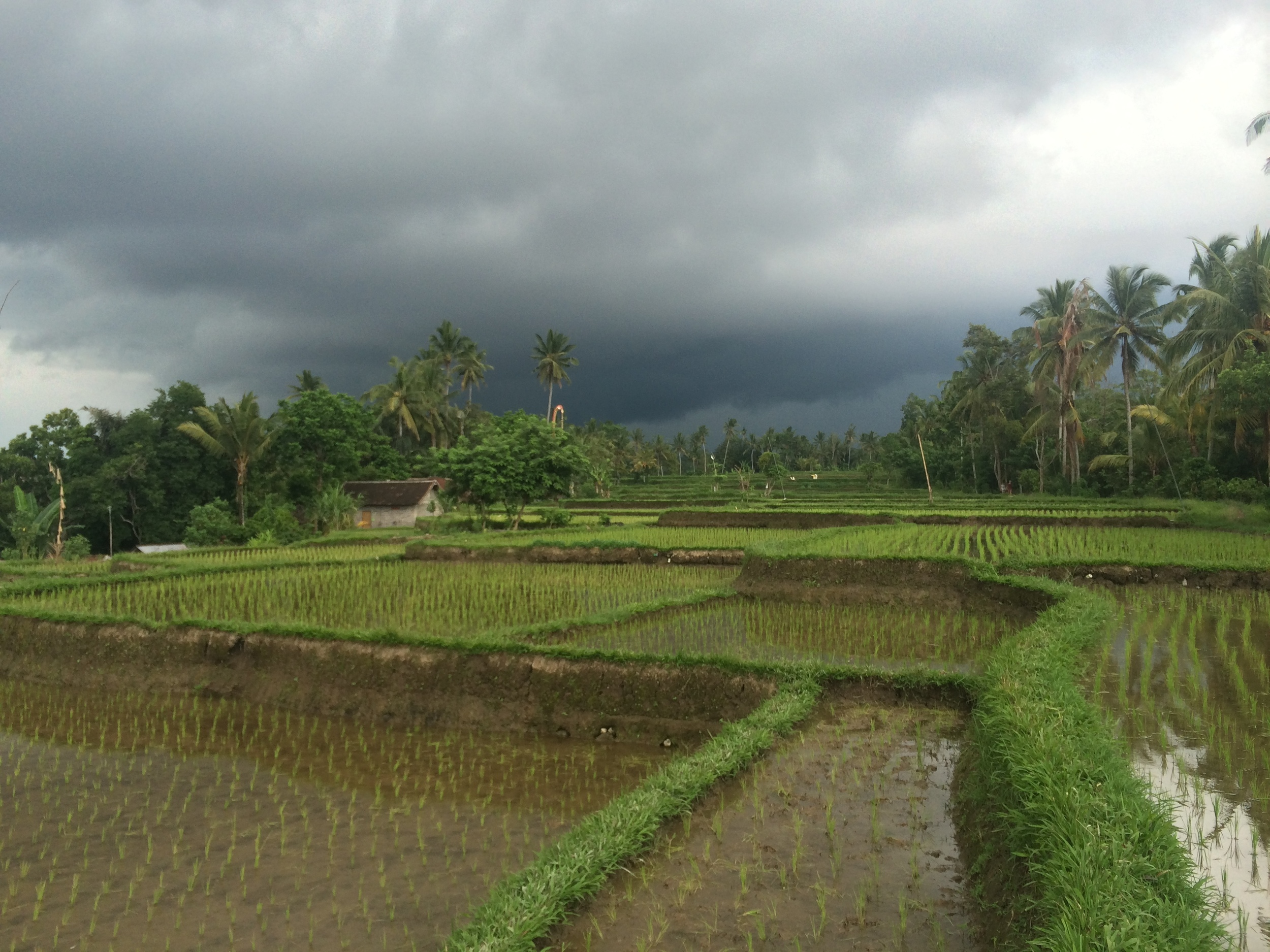 Lovely rice paddies that look freshly planted