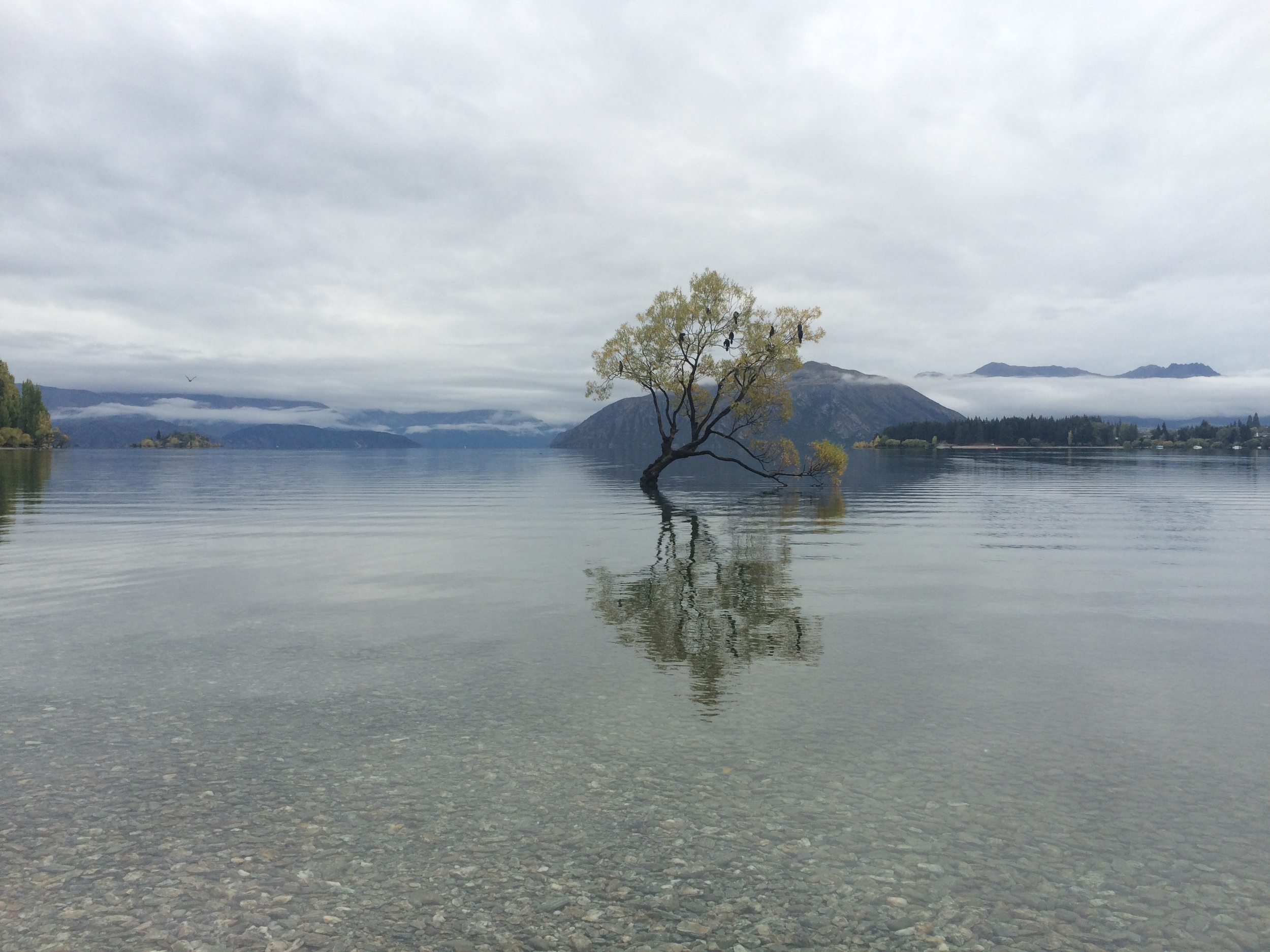 Lone tree at Lake Wanaka