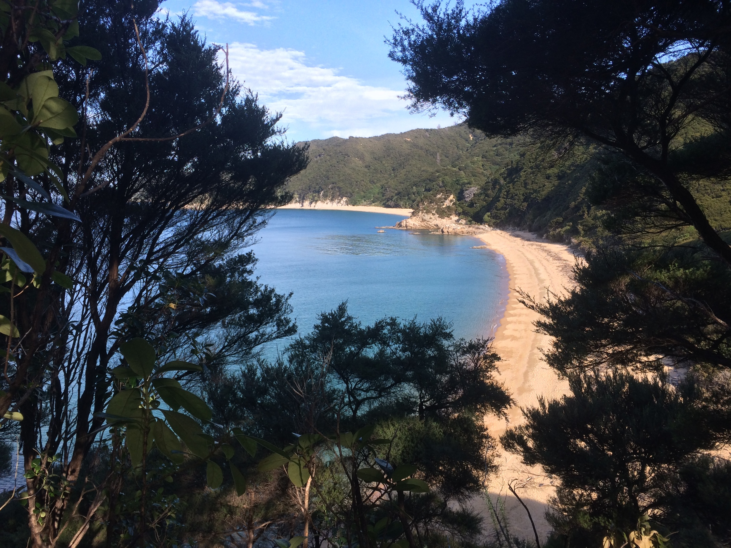 A sneak peak at a beach on the Abel Tasman walk