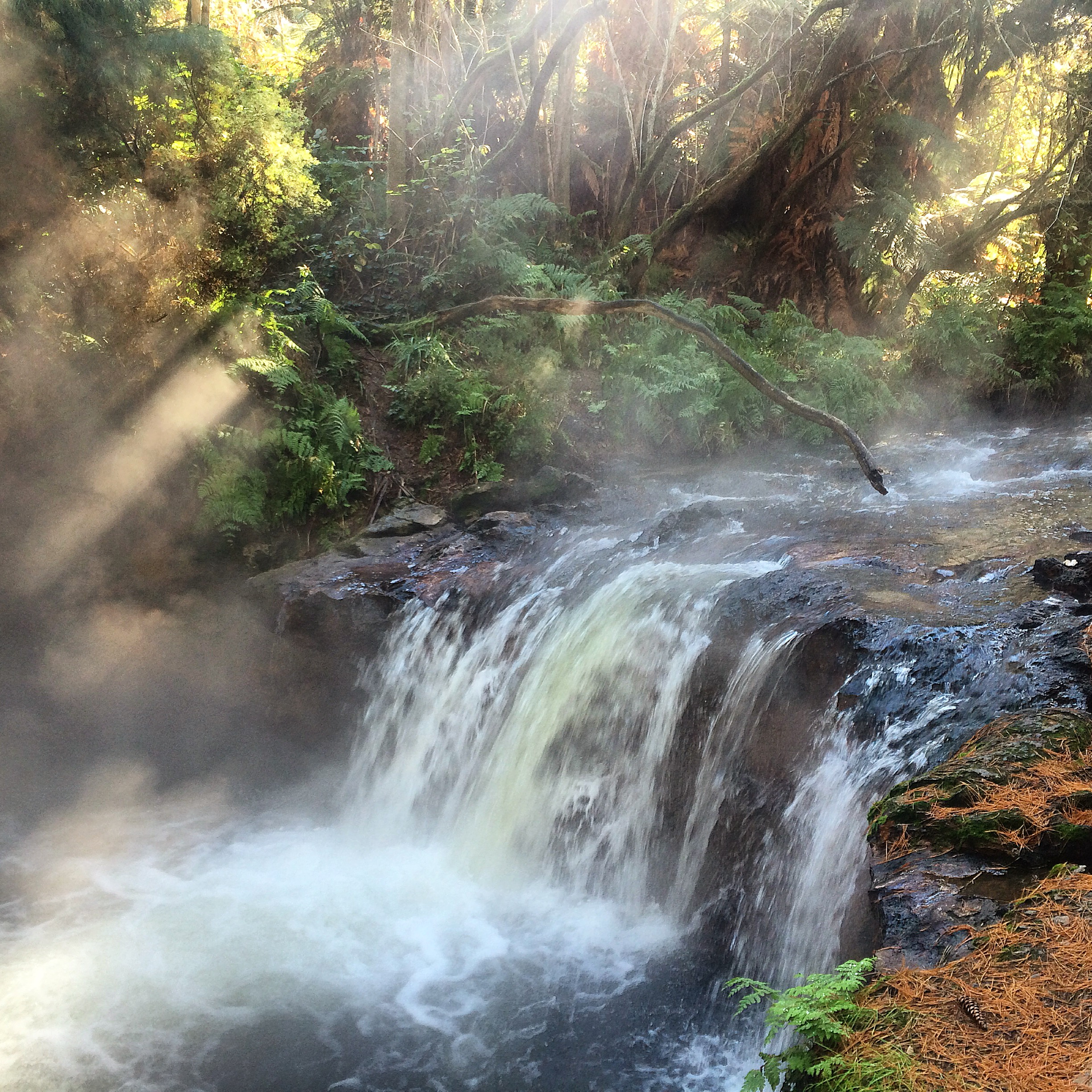 Hot waterfalls and streams at Kerosene Creek