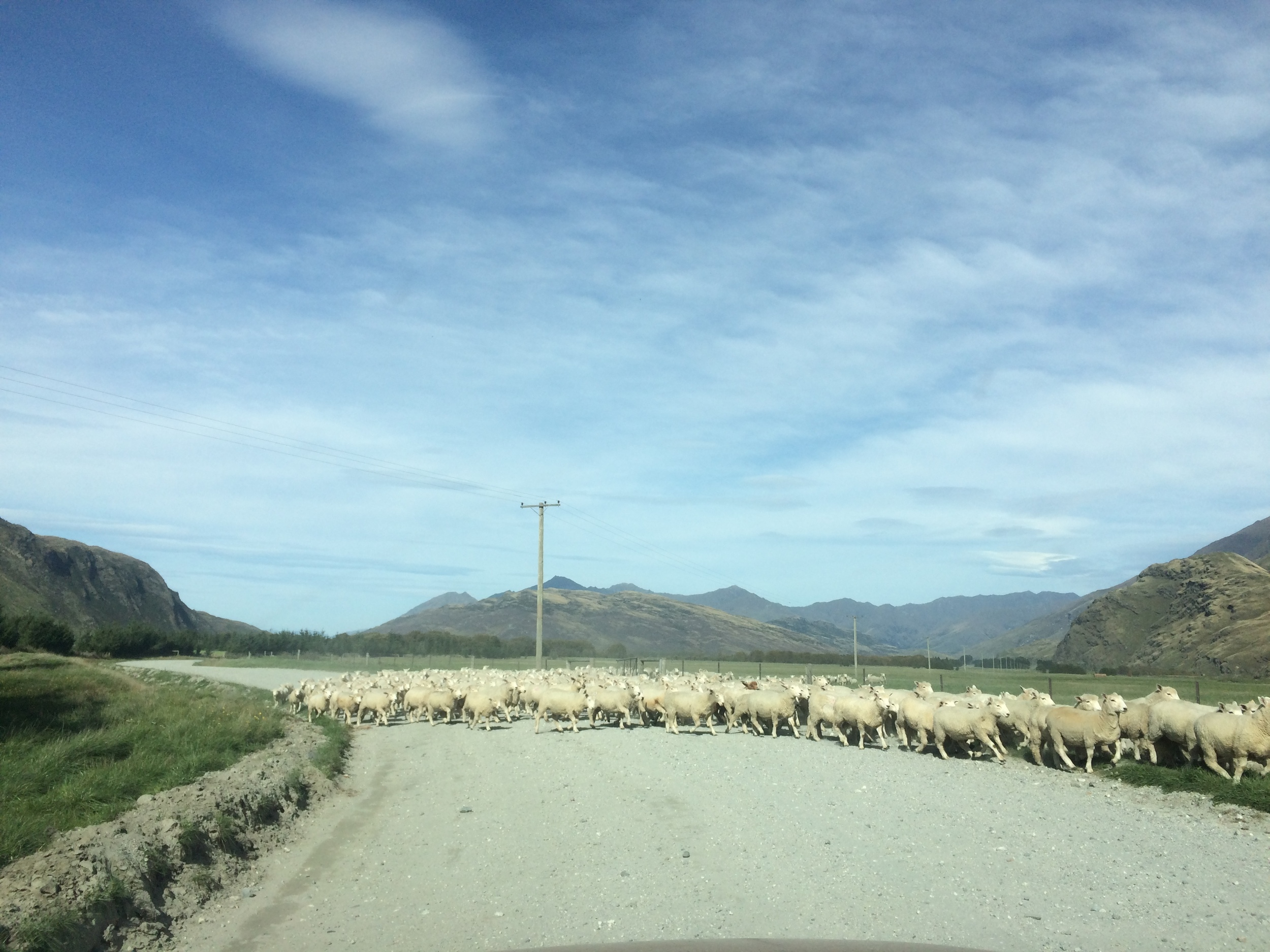 You can't forget about the sheep in New Zealand, they are everywhere!