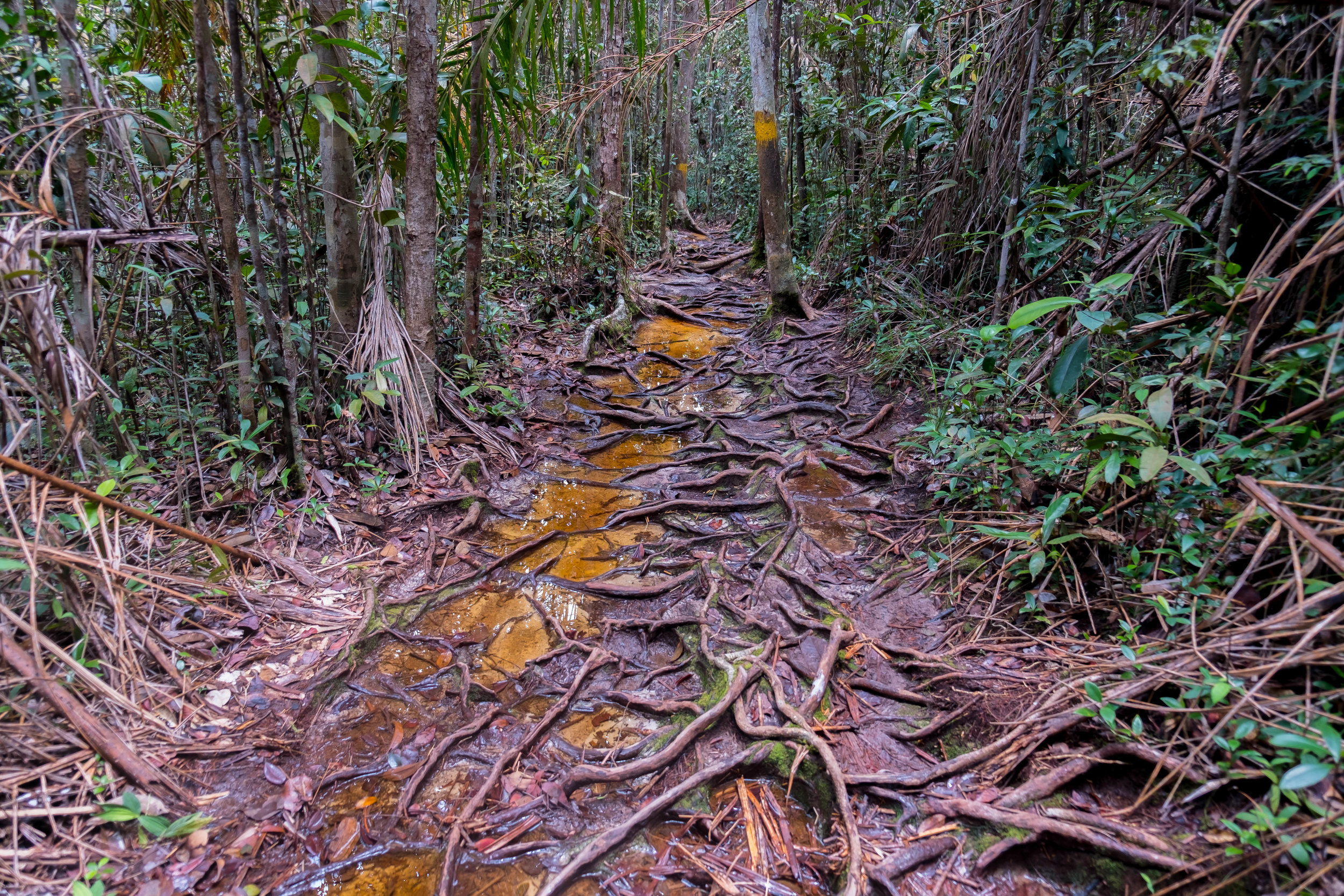 The trails inside Bako National Park