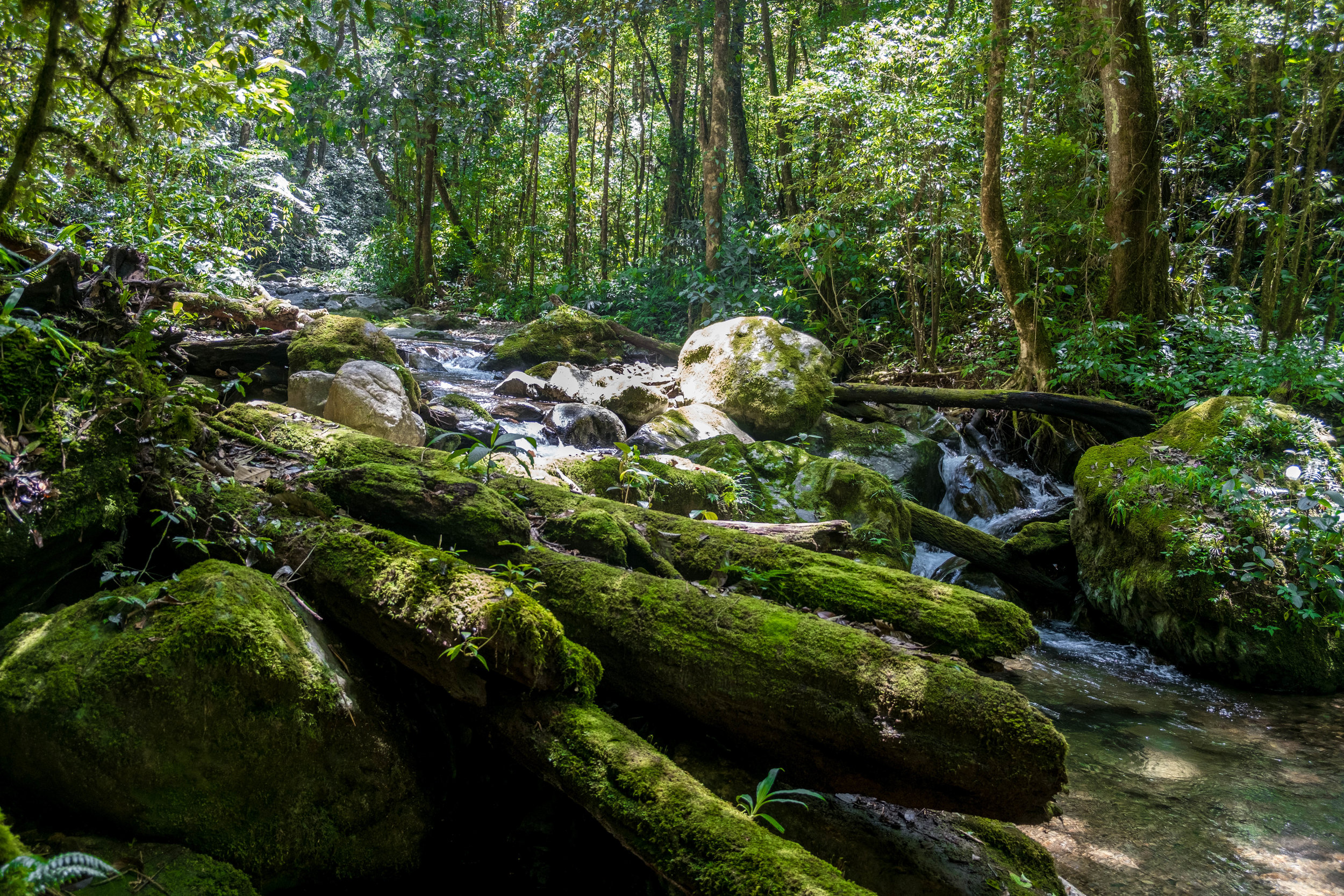 Hiking in Kinabalu National Park