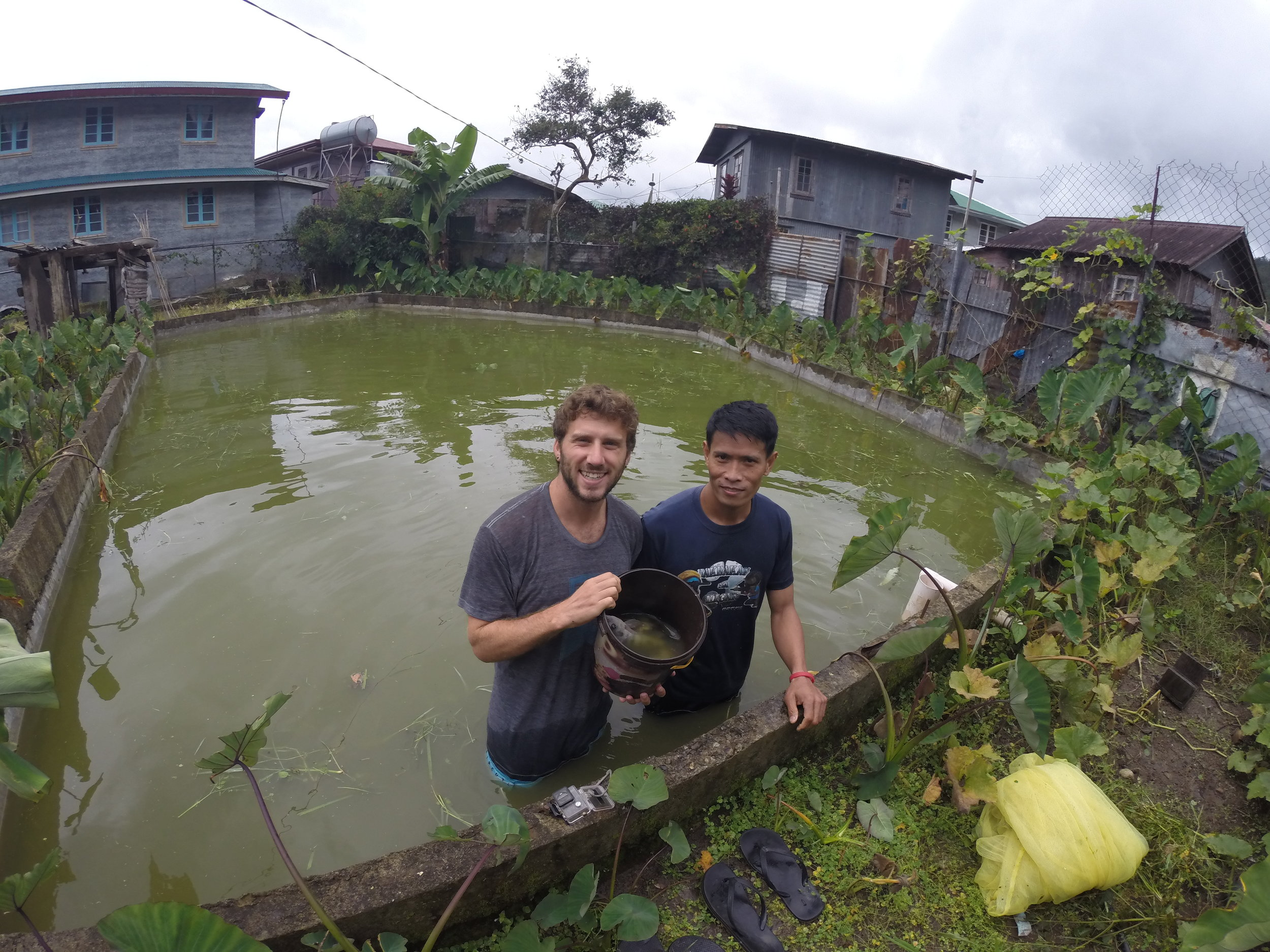 Catching Tilapia with a net with Joseph - had it for lunch later