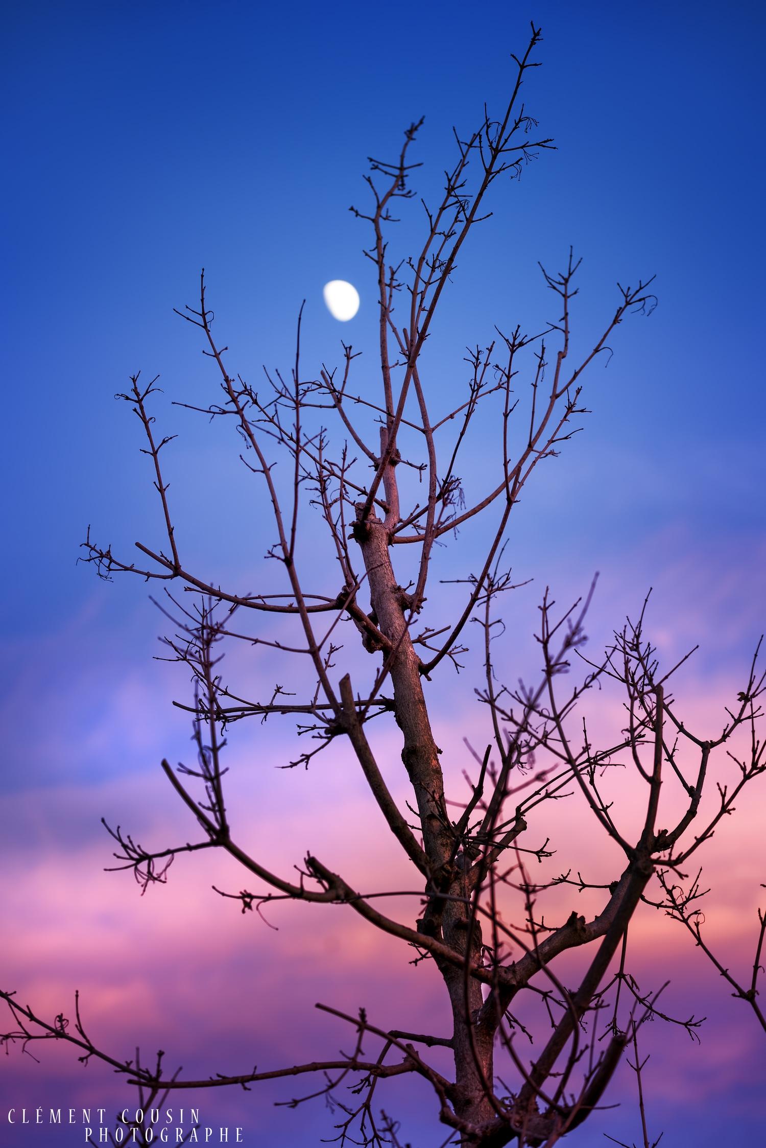 """""""L'arbre Lunaire"""" © Clément Cousin"""