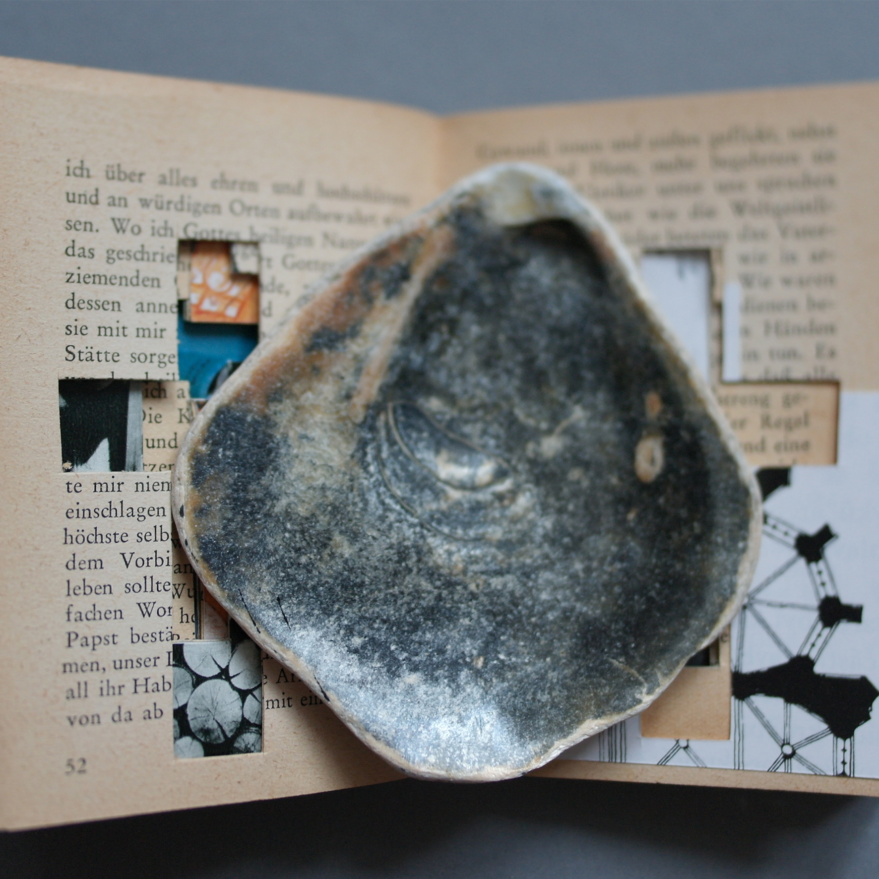 square shell & book.jpg