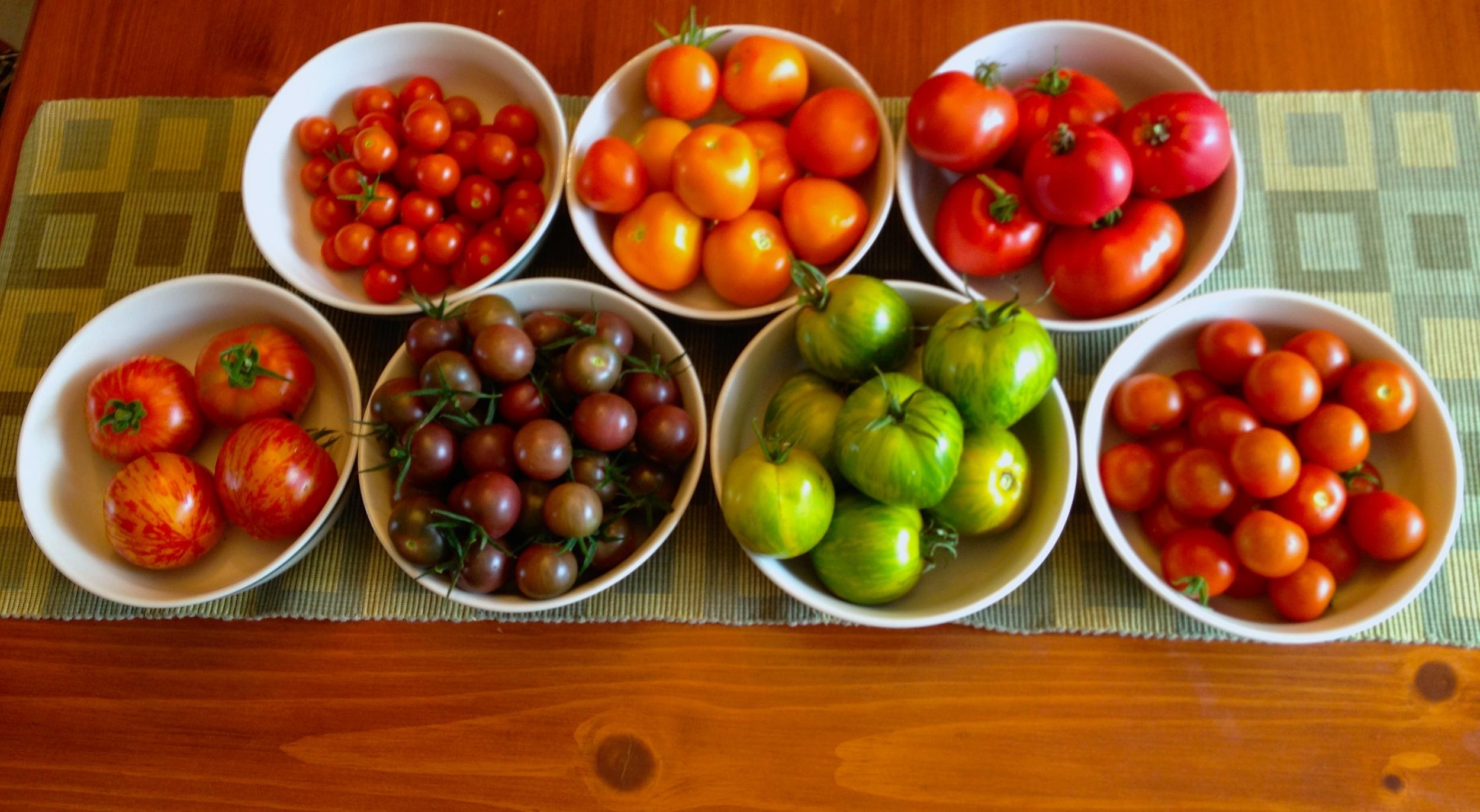 Tomato Harvest 3.JPG