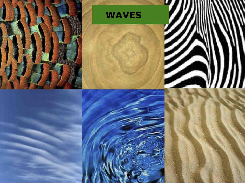 Patterns in NaturePDC2014 2 L.jpg