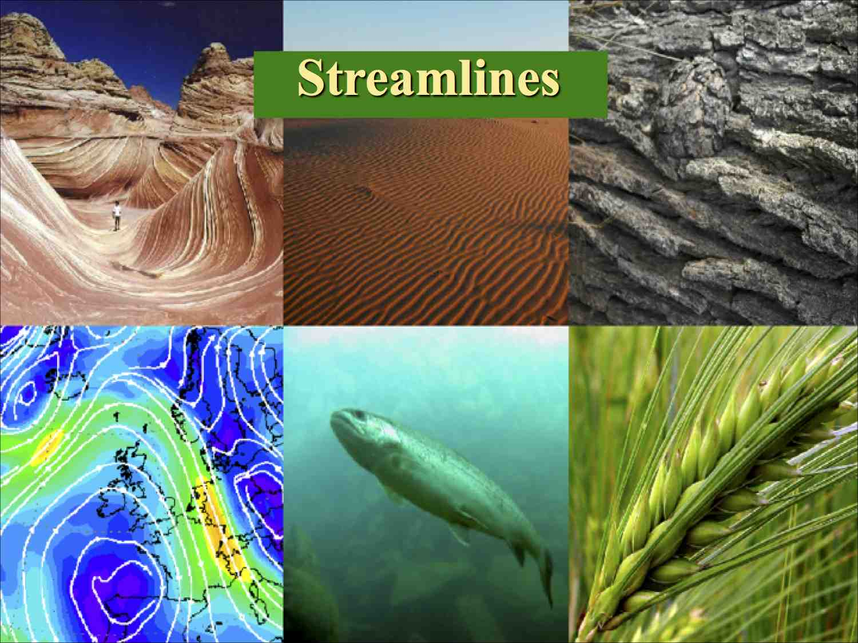Patterns in NaturePDC2014 4 L.jpg