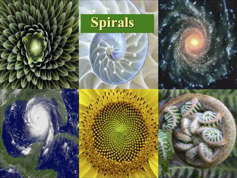 Patterns in NaturePDC2014 6 L.jpg