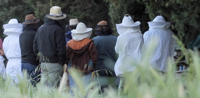 Stage apiculture écologique - 18, 19 novembre 2017, mas AlavallDavid Mérino-Rigaill