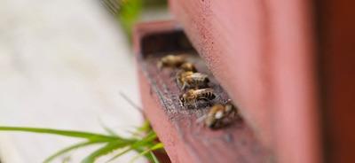 Stage apiculture écologique - 24, 25 novembre 2017, mas AlavallDavid Mérino-Rigaill