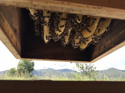 Mise en fonctionnement du rucher du mas Alavall, avril 2018