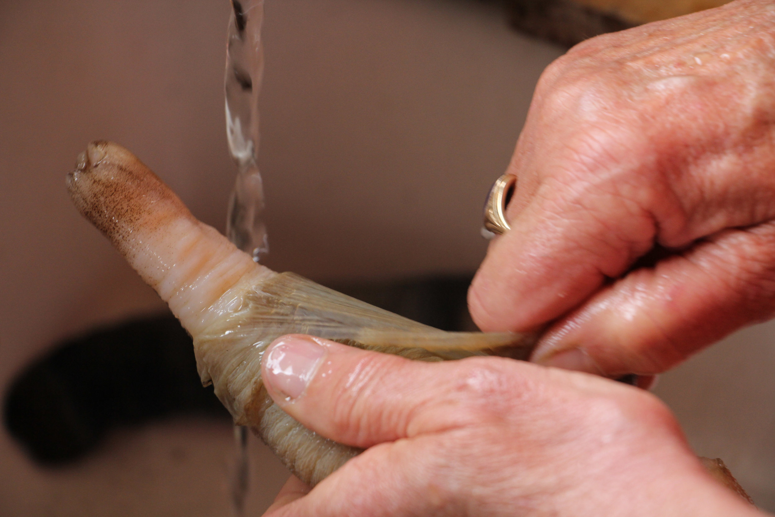 Cleaning a geoduck step two