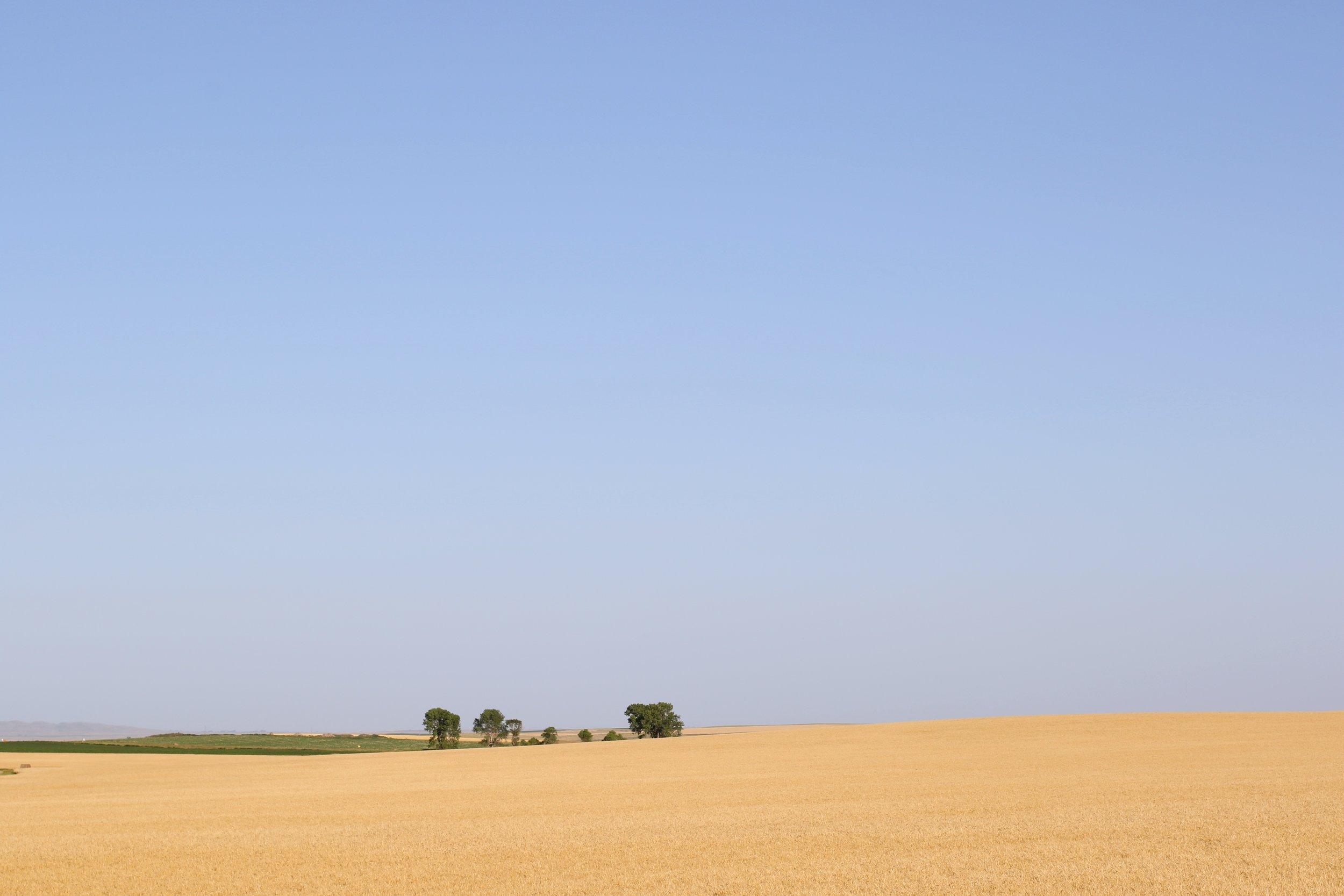 Wheat Fields South Dakota.jpg