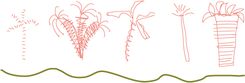 coral palm sketch.png