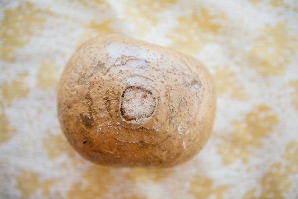 jicama - my new favorite ingredient  - chasing saturdays