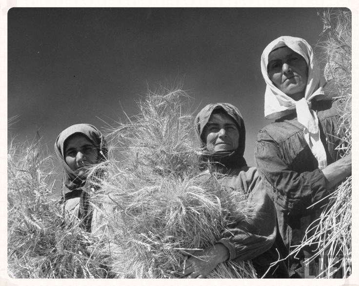 Ukrainian women at harvest time