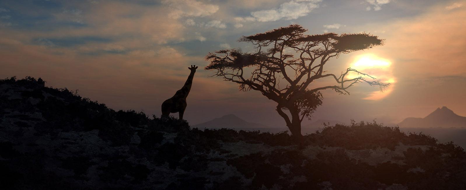 African-grassy-sunset-matte-Animation.jpg