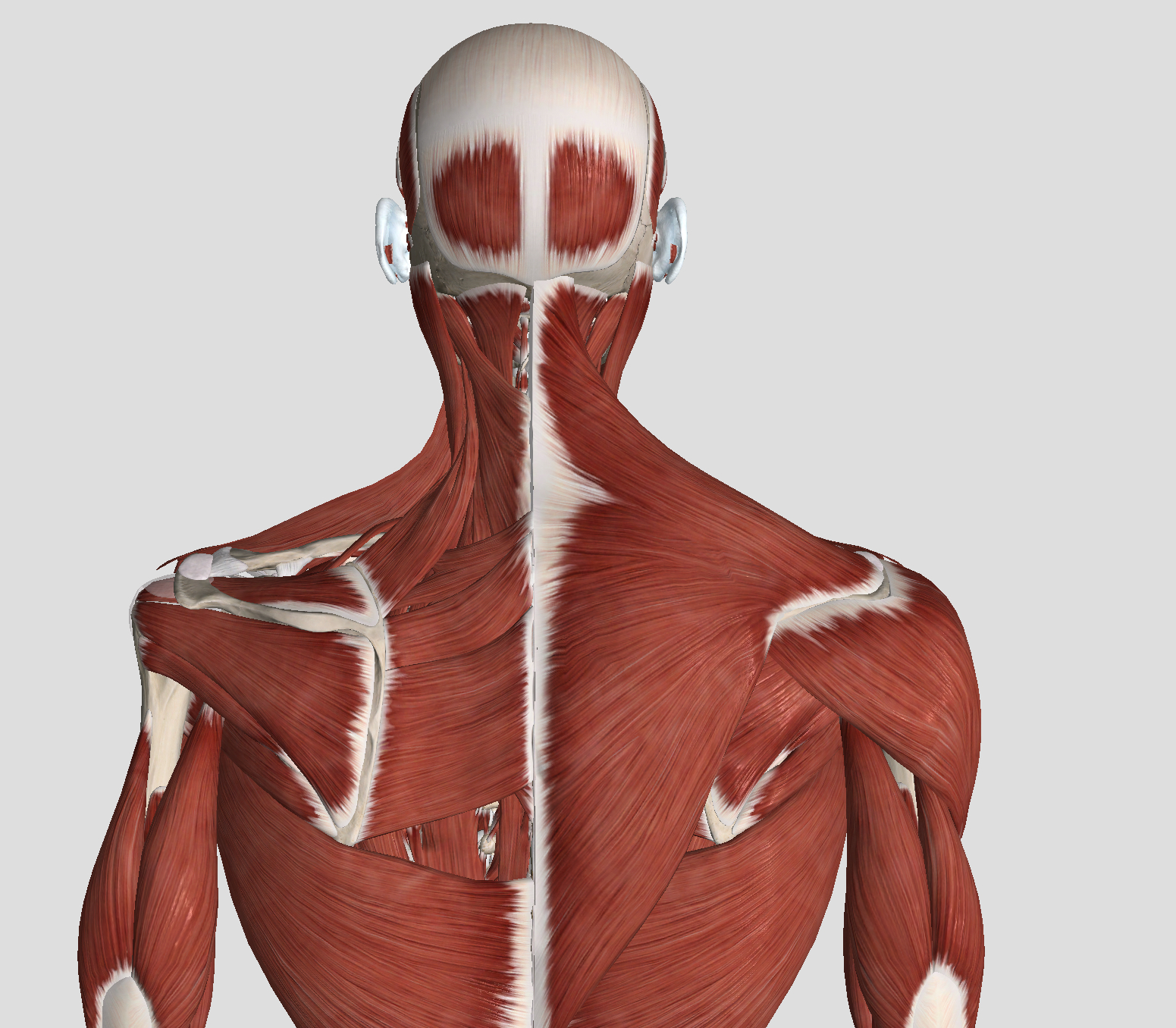 Do you get neck pain when you get stressed?