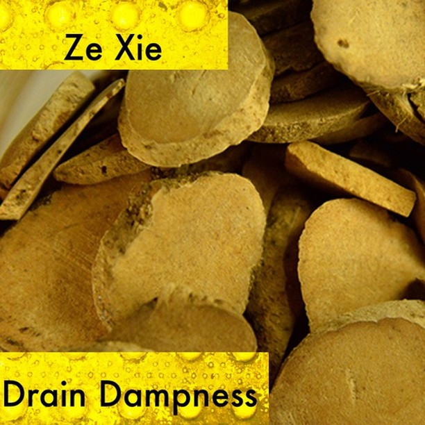 The water plantain leaches out pathogenic water and drains fire from the system through the bladder. If your patients is experiencing urinary difficulty or dark urine, with dizziness, and edema they are a perfect candidate for  using ze xie. Ze xie helps descend flaring ministerial fire because it is cold and helps drain damp heat from the lower burner. As a whole it facilitates the fluid pathways in the body and should be carefully used if your patient has a deficient middle burner. You can easily run the risk of making their symptoms worse if there are no signs of heat by damaging the yang transformative qi  If you know someone who would like our channel please forward our posts to them!  #theduchannel #herbalmedicine #acupuncture #eastasianmedicinestudent #eastasianmedicine #acupuncturestudent #herbalist #herbs #witch #naturalmedicine #herbalism #tcm