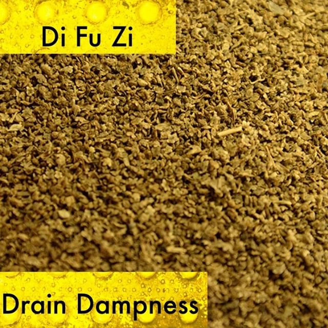 Mostly I use di fu zi as an external wash for damp heat in the lower burner that is manifesting as external itching. It clears damp heat from the genitals extremely well.  If you know someone who would like our channel please forward our posts to them!  #theduchannel #herbalmedicine #acupuncture #eastasianmedicinestudent #eastasianmedicine #acupuncturestudent #herbalist #herbs #witch #naturalmedicine #herbalism #tcm