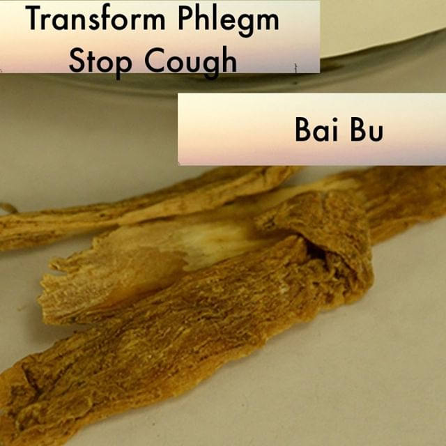 Bai bu is mildly warming. It is sweet and thus moistens the lungs. When it is used in my clinic it is mostly for chronic cough from deficiency. It is used actually quiet a lot in my clinic because of how much I use Zhi Sou San If you know someone who would like our channel please forward our posts to them!  #theduchannel #herbalmedicine #acupuncture #eastasianmedicinestudent #eastasianmedicine #acupuncturestudent #herbalist #herbs #witch #naturalmedicine #herbalism #tcm