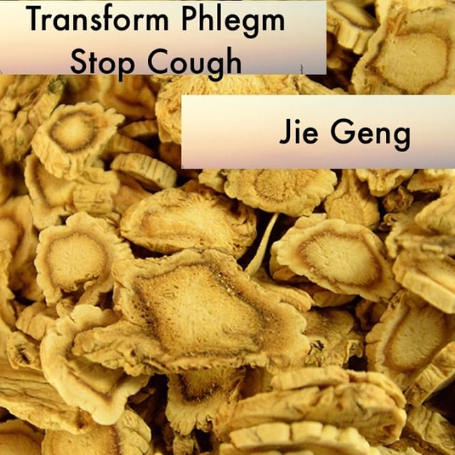 Jie Geng drains and disperses in the body and is also ascending. This unique combination gives it the qualities of both stopping cough and benefitting the throat. I love the classical comparisons of jie geng to a boat that carries other herbs. A warning though: if used improperly jie geng can prevent other herbs from properly descending in the body.  as a side note I wanted to let you know that we have been working on course material over the last 2 years and will be launching classes this fall. Send us a message and let us know if you would be interested in taking classes on herbs, safety, ethics, best business practices, pharmacy management, and point selection/location. We have many classes that are still being edited and finalized but looking forward to these getting approved for NCCAOM credits.  If you know someone who would like our channel please forward our posts to them!  #theduchannel #herbalmedicine #acupuncture #eastasianmedicinestudent #eastasianmedicine #acupuncturestudent #herbalist #herbs #witch #naturalmedicine #herbalism #tcm