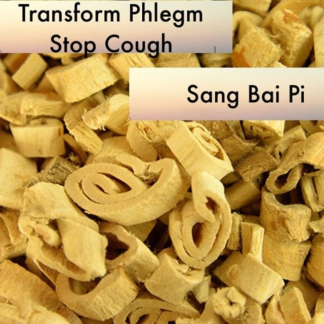 I can't really be sure why I forget to use Sang Bai Pi more. But it is often an herb when a patient returns and there cough or wheezing has not settled I remember to add to their formula and viola their wheezing settles down. It also will find its way into formulas when I realize the patient has edema from urinary difficulty that is caused by excess heat. Especially if that edema is puffiness around the eyes.  If you know someone who would like our channel please forward our posts to them!  #theduchannel #herbalmedicine #acupuncture #eastasianmedicinestudent #eastasianmedicine #acupuncturestudent #herbalist #herbs #witch #naturalmedicine #herbalism #tcm